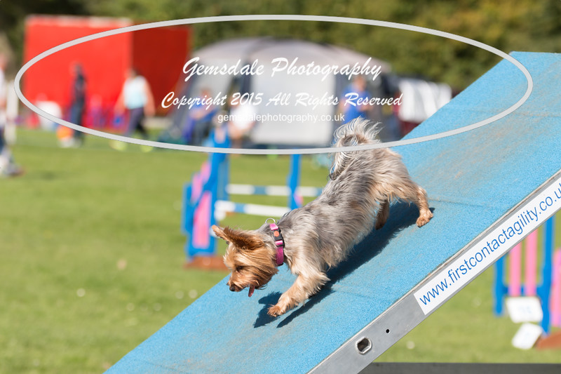 KC Southdowns Agility September 2015 -9001