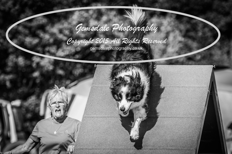 KC Southdowns Agility September 2015 -9027