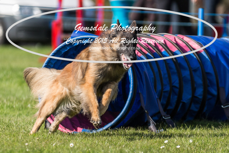 KC Southdowns Agility September 2015 -9039