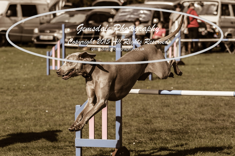 KC Southdowns Agility September 2015 -9011