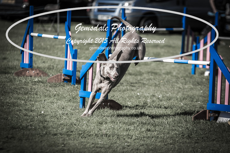KC Southdowns Agility September 2015 -9013
