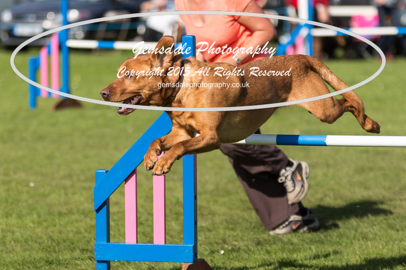 KC Southdowns Agility September 2015 -9016