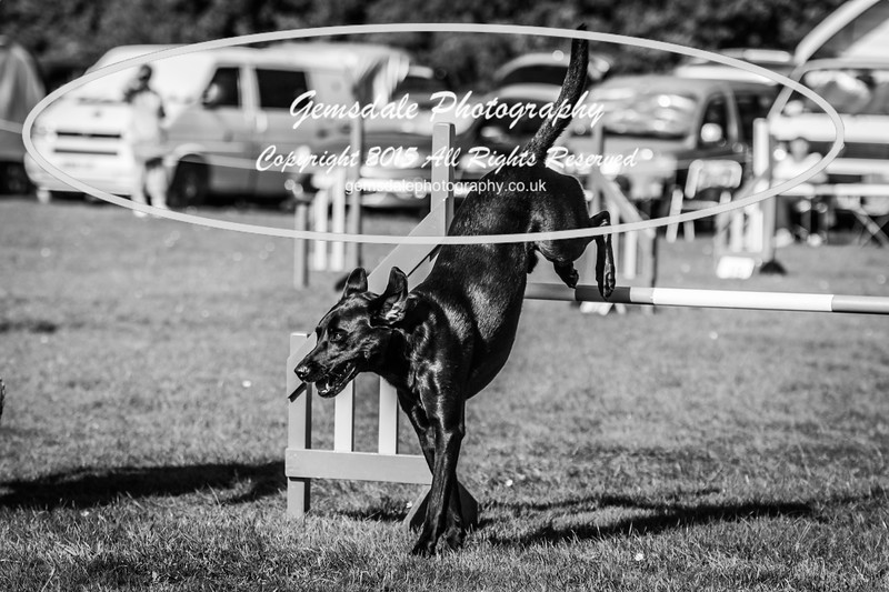KC Southdowns Agility September 2015 -9044