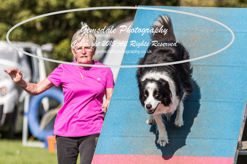 KC Southdowns Agility September 2015 -9028