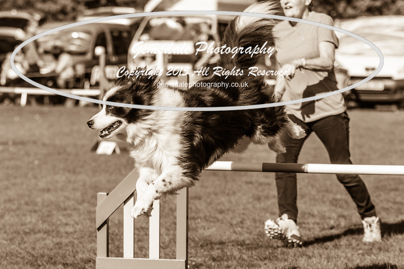 KC Southdowns Agility September 2015 -9029