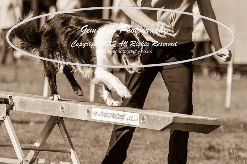 KC Southdowns Agility September 2015 -9038