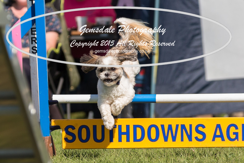 KC Southdowns Agility September 2015 -9006