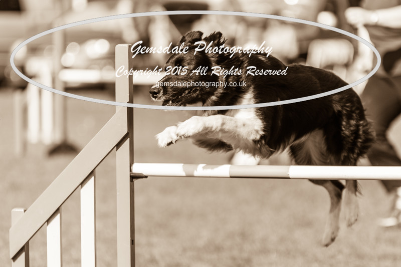 KC Southdowns Agility September 2015 -9021