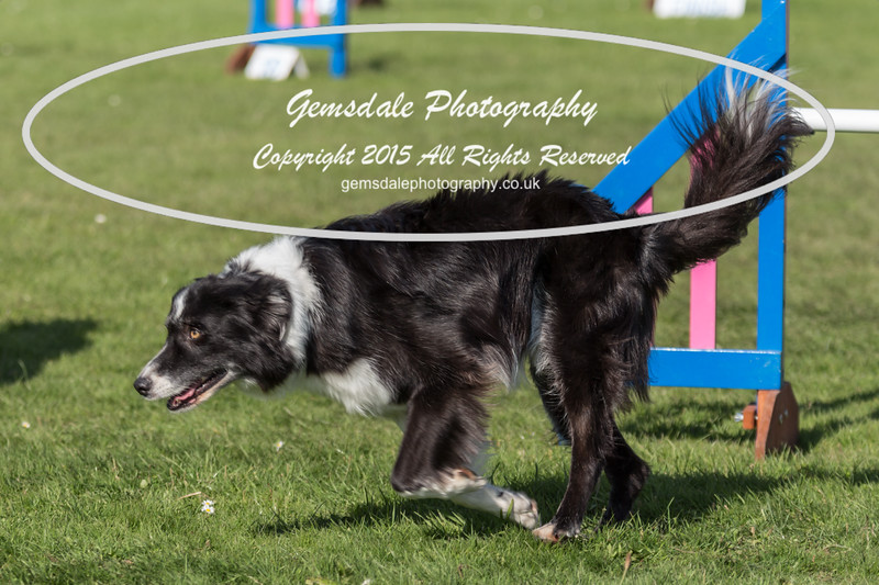 KC Southdowns Agility September 2015 -9035