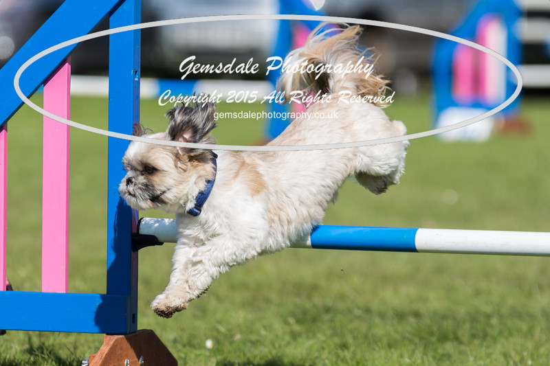 KC Southdowns Agility September 2015 -9007