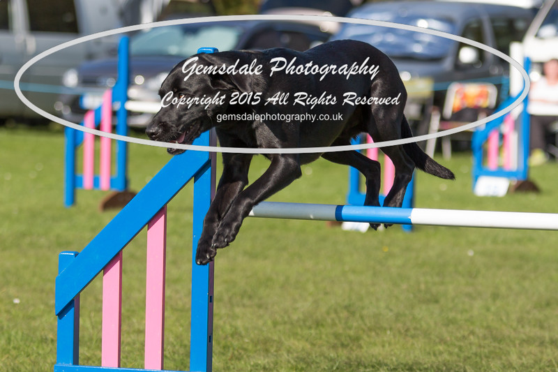 KC Southdowns Agility September 2015 -9043