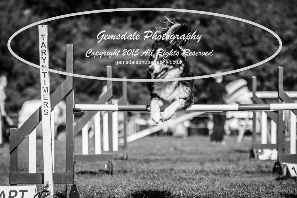 KC Southdowns Agility September 2015 -6030