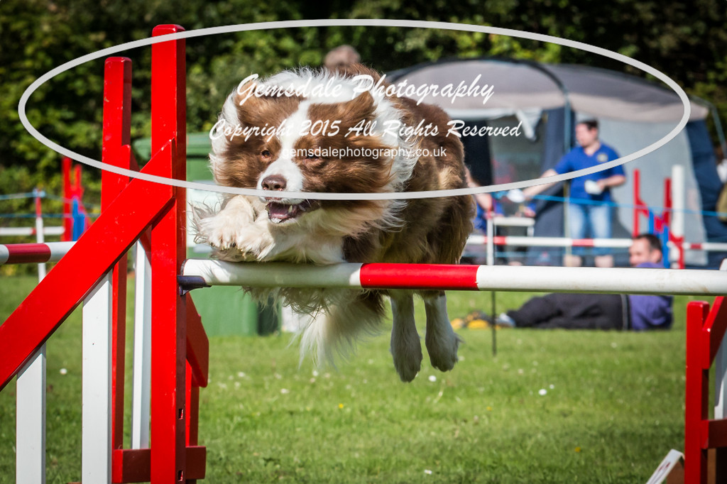 KC Southdowns Agility September 2015 -6015