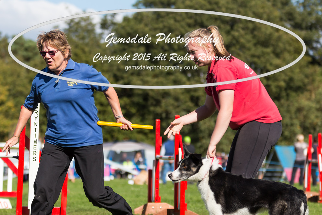 KC Southdowns Agility September 2015 -6031