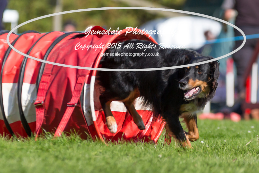 KC Southdowns Agility September 2015 -6034