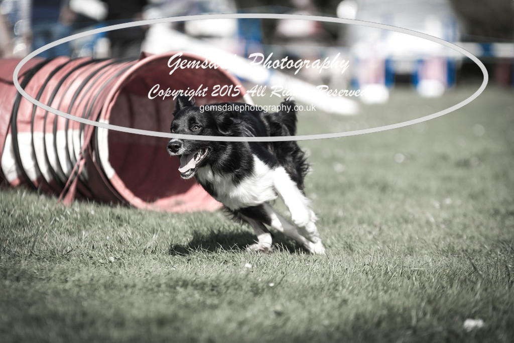 KC Southdowns Agility September 2015 -6025