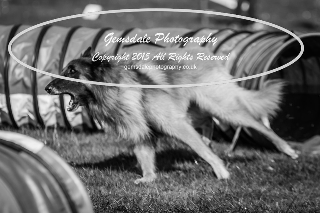 KC Southdowns Agility September 2015 -6022