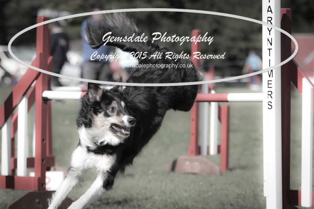 KC Southdowns Agility September 2015 -6010