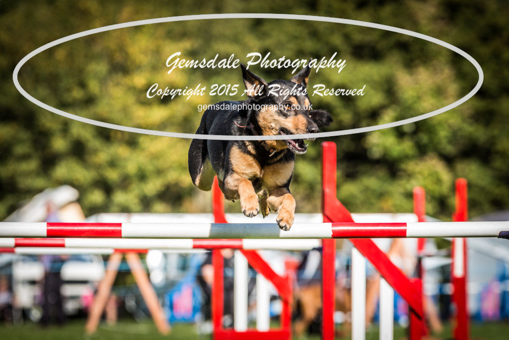 KC Southdowns Agility September 2015 -6036
