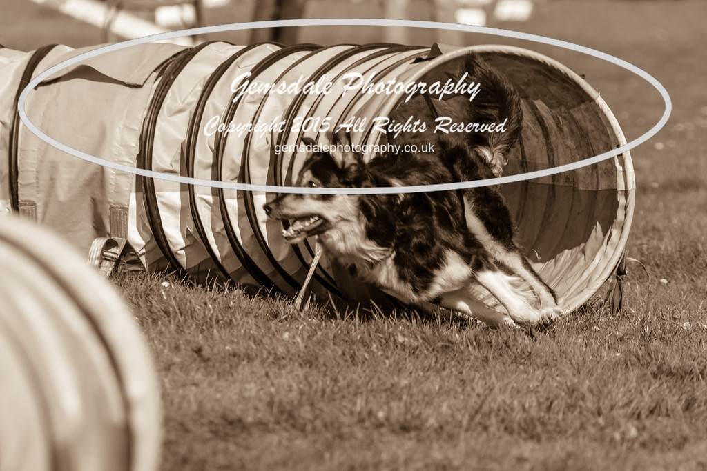 KC Southdowns Agility September 2015 -6009
