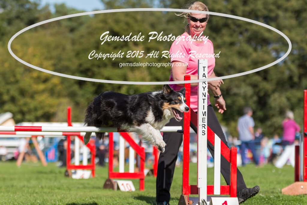 KC Southdowns Agility September 2015 -6040