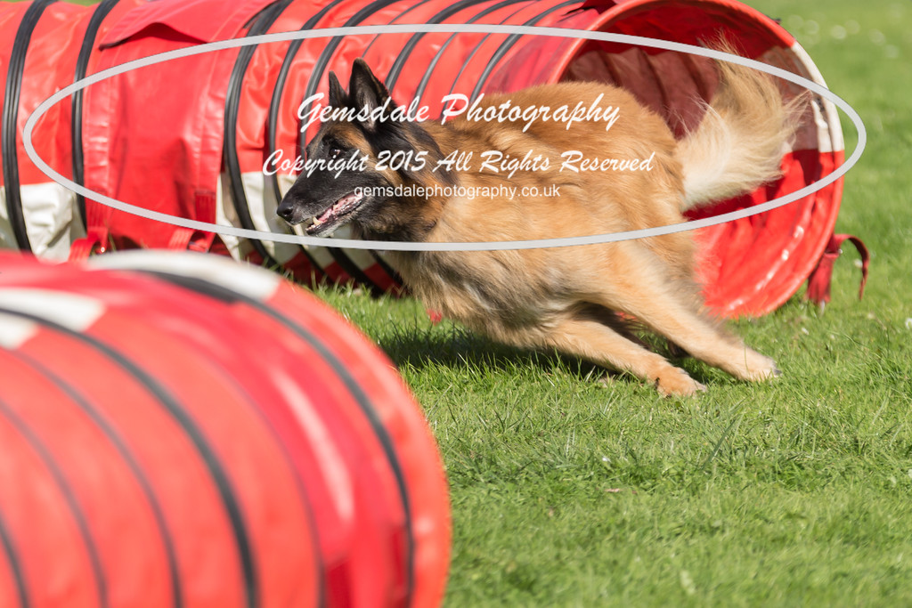 KC Southdowns Agility September 2015 -6020