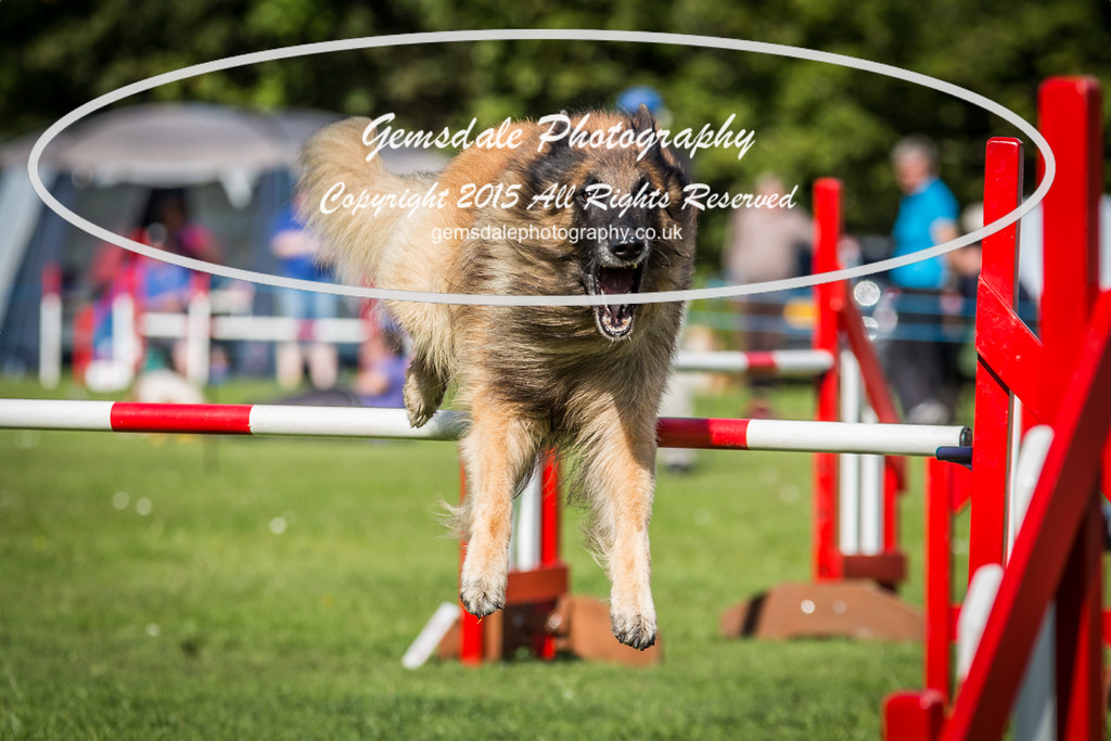 KC Southdowns Agility September 2015 -6023
