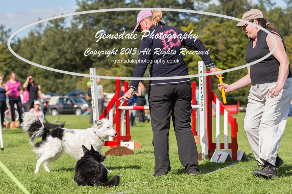 KC Southdowns Agility September 2015 -6004