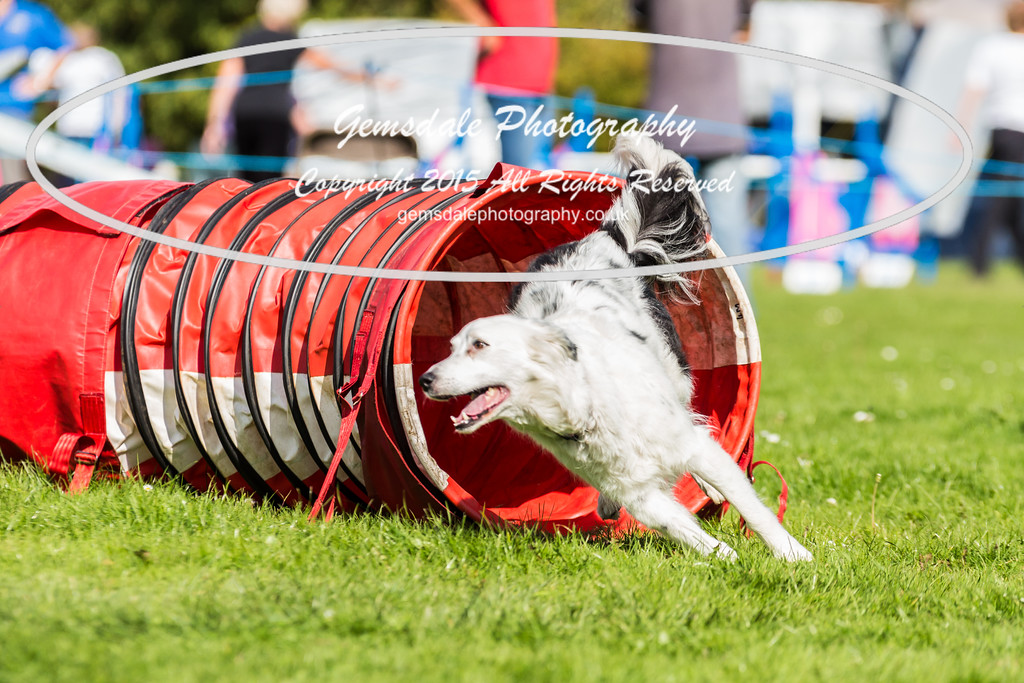 KC Southdowns Agility September 2015 -6003