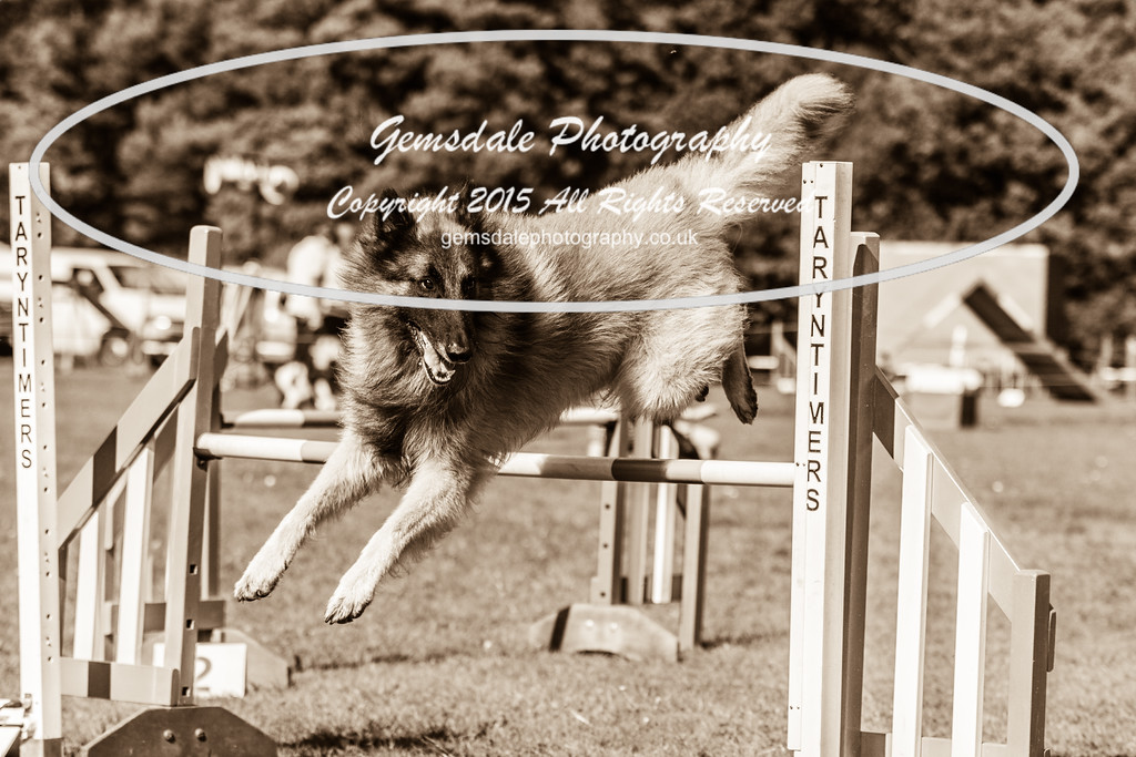 KC Southdowns Agility September 2015 -6024