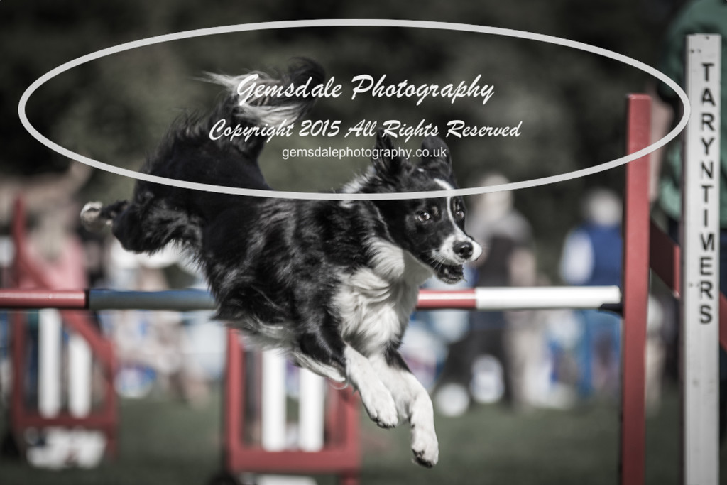 KC Southdowns Agility September 2015 -6033