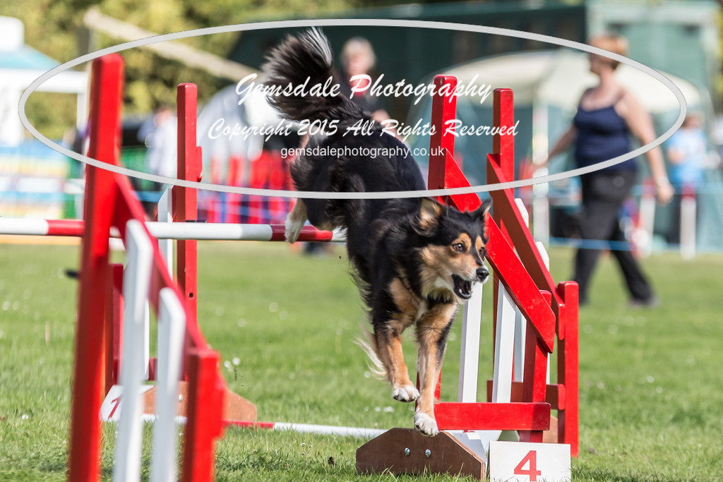 KC Southdowns Agility September 2015 -6000