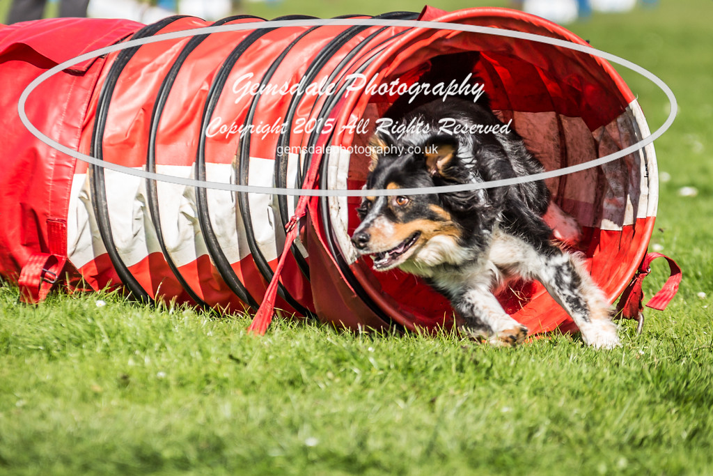 KC Southdowns Agility September 2015 -6028
