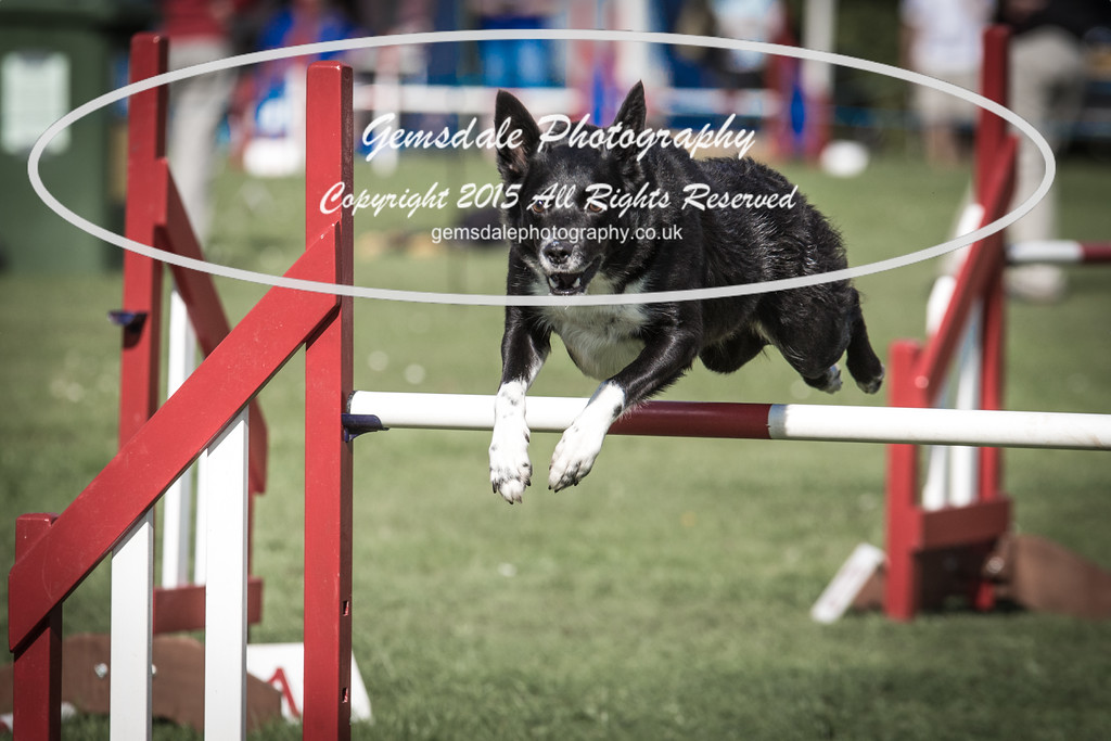 KC Southdowns Agility September 2015 -6006