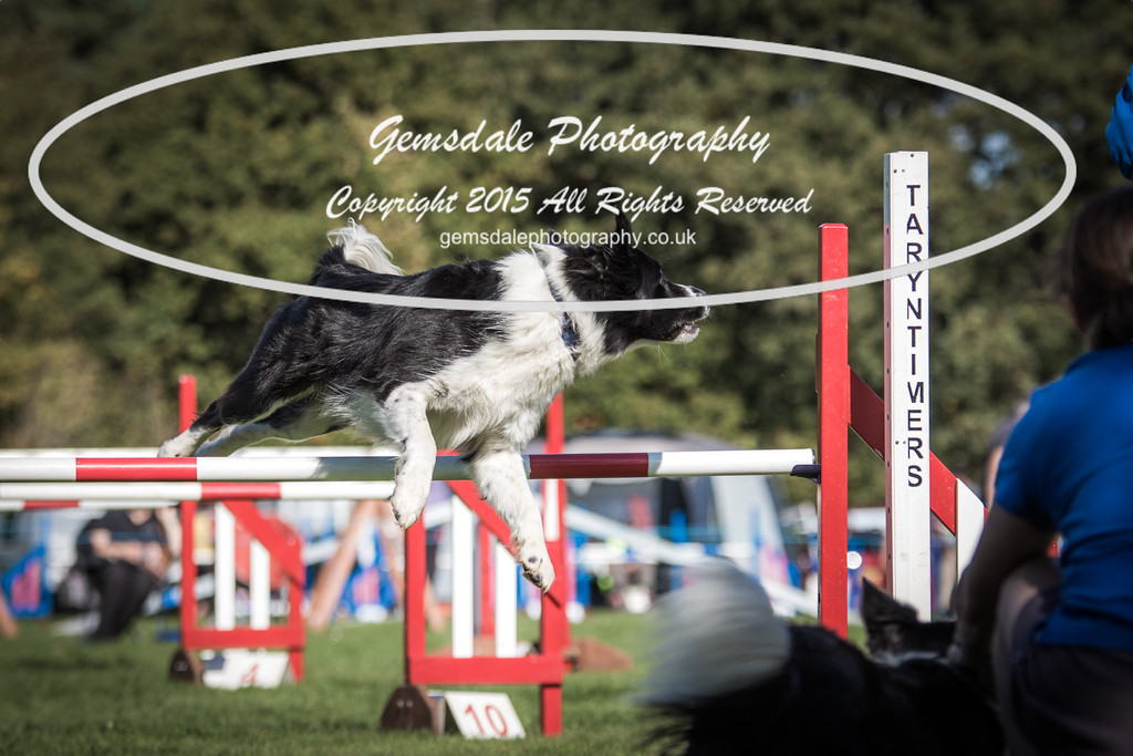 KC Southdowns Agility September 2015 -6041