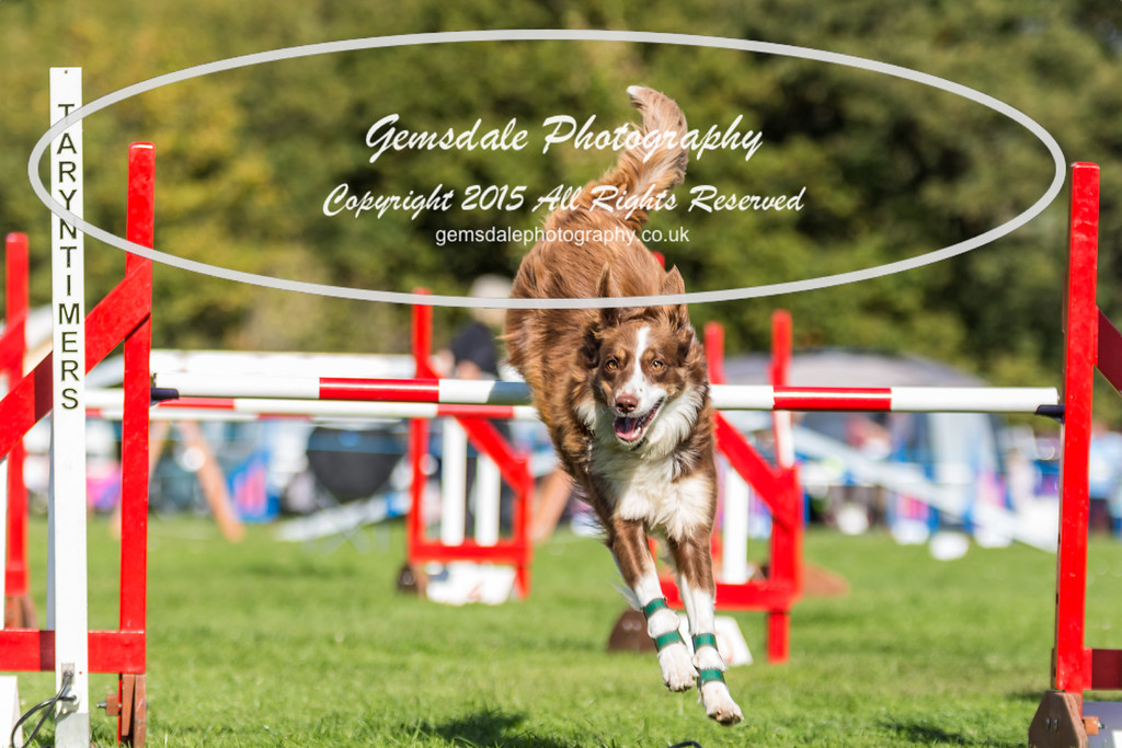 KC Southdowns Agility September 2015 -6042