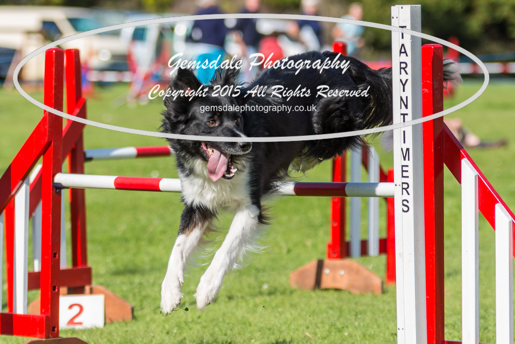 KC Southdowns Agility September 2015 -6027