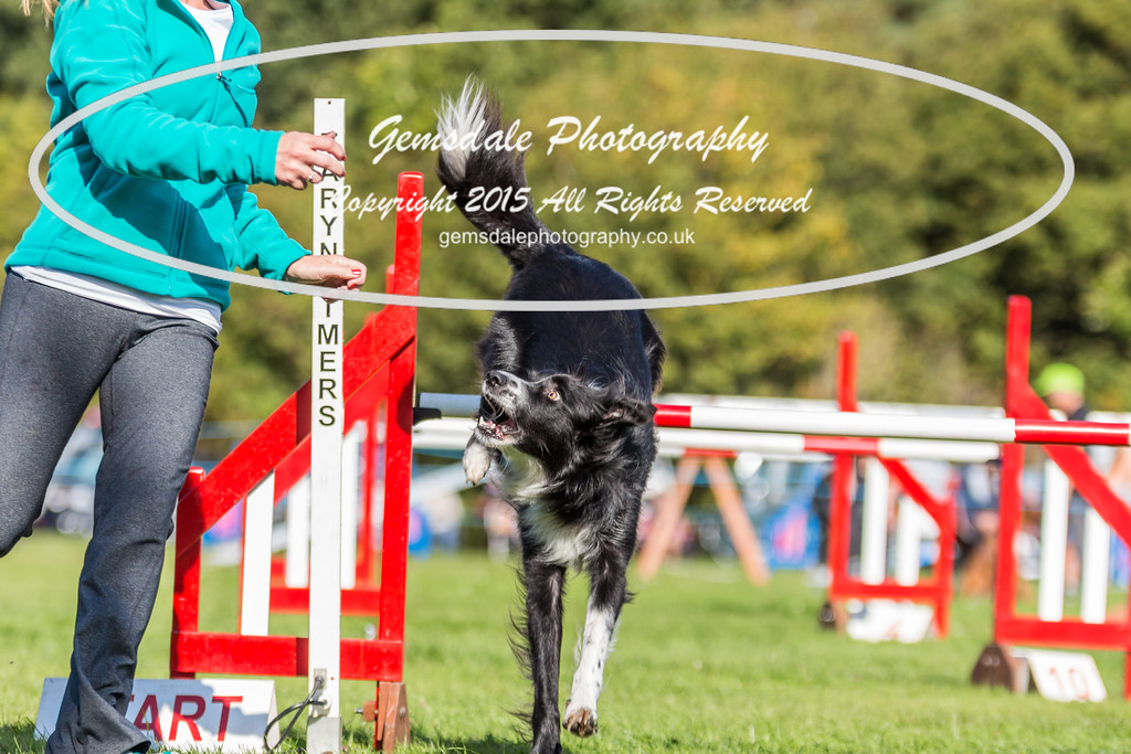 KC Southdowns Agility September 2015 -6037