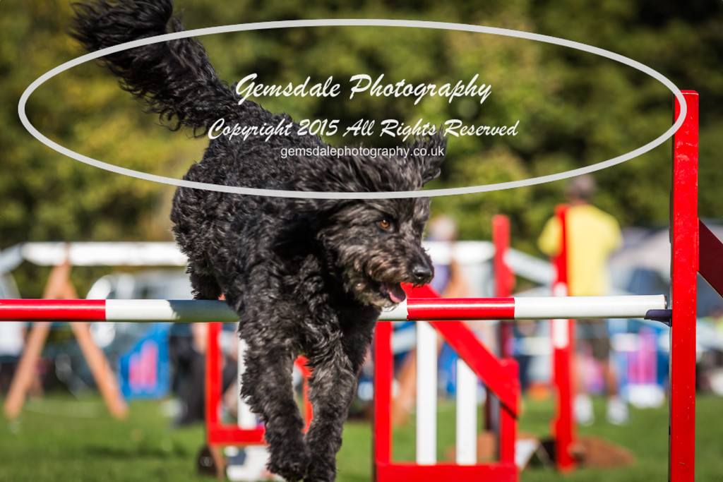 KC Southdowns Agility September 2015 -6039