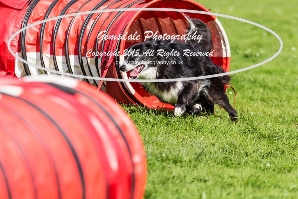 KC Southdowns Agility September 2015 -6012