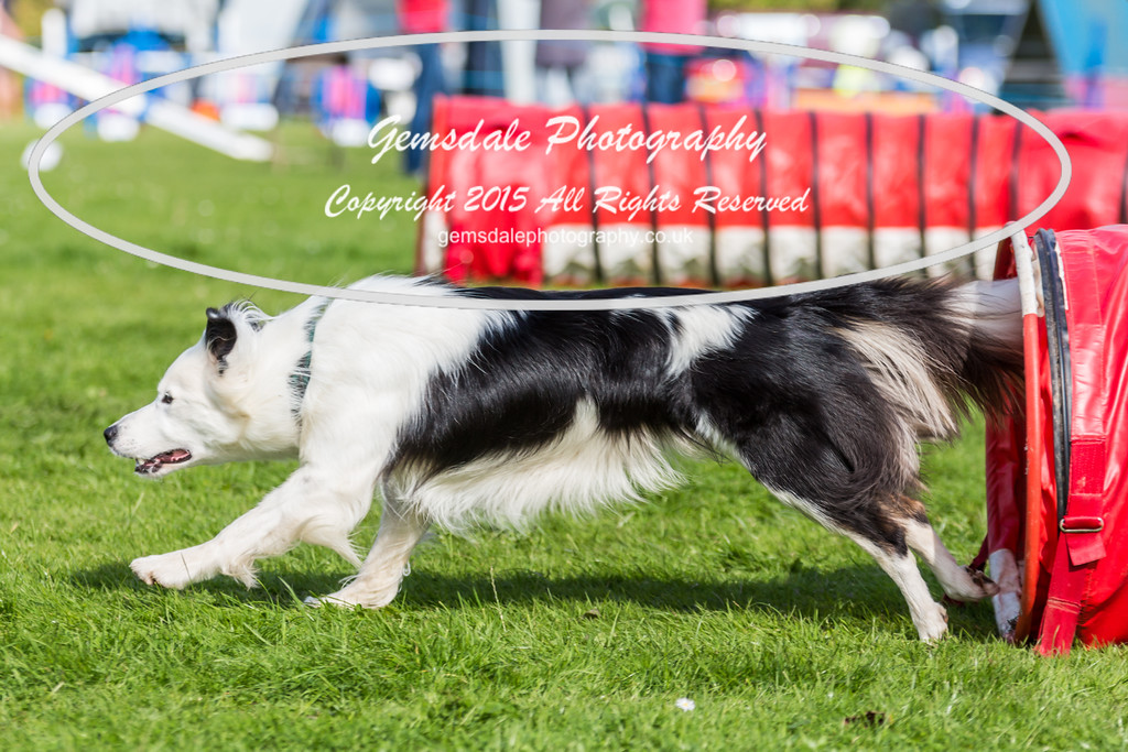 KC Southdowns Agility September 2015 -6001