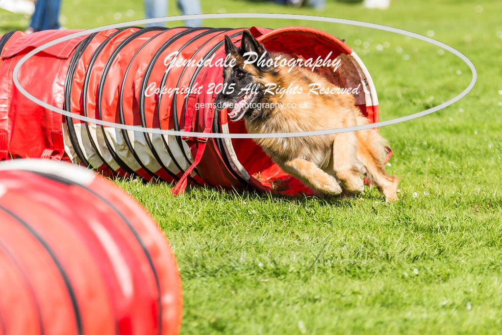 KC Southdowns Agility September 2015 -6019