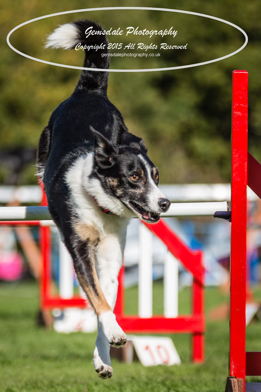 KC Southdowns Agility September 2015 -6032