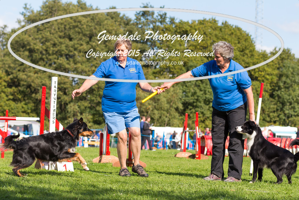 KC Southdowns Agility September 2015 -6035