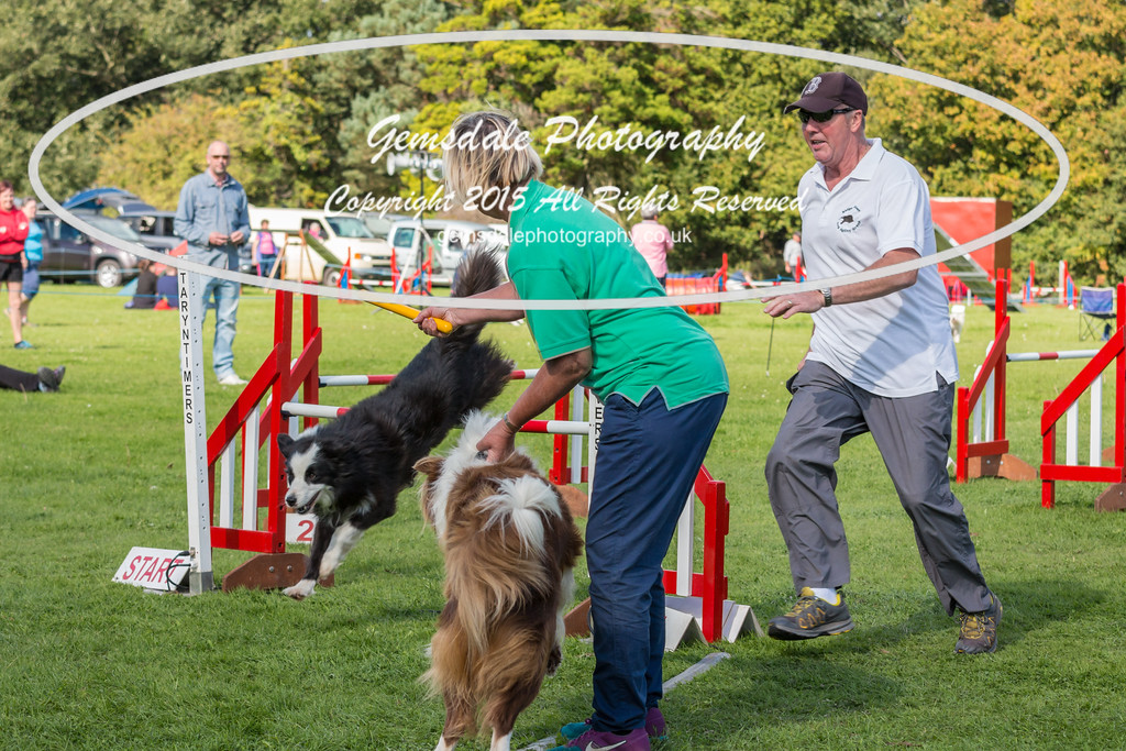 KC Southdowns Agility September 2015 -6014