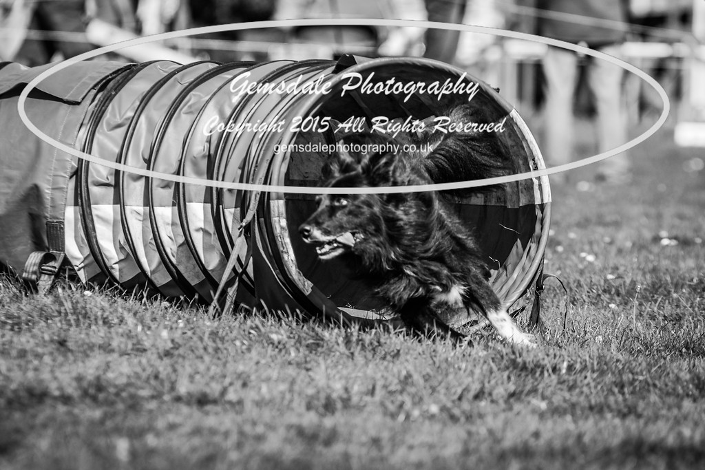 KC Southdowns Agility September 2015 -6008