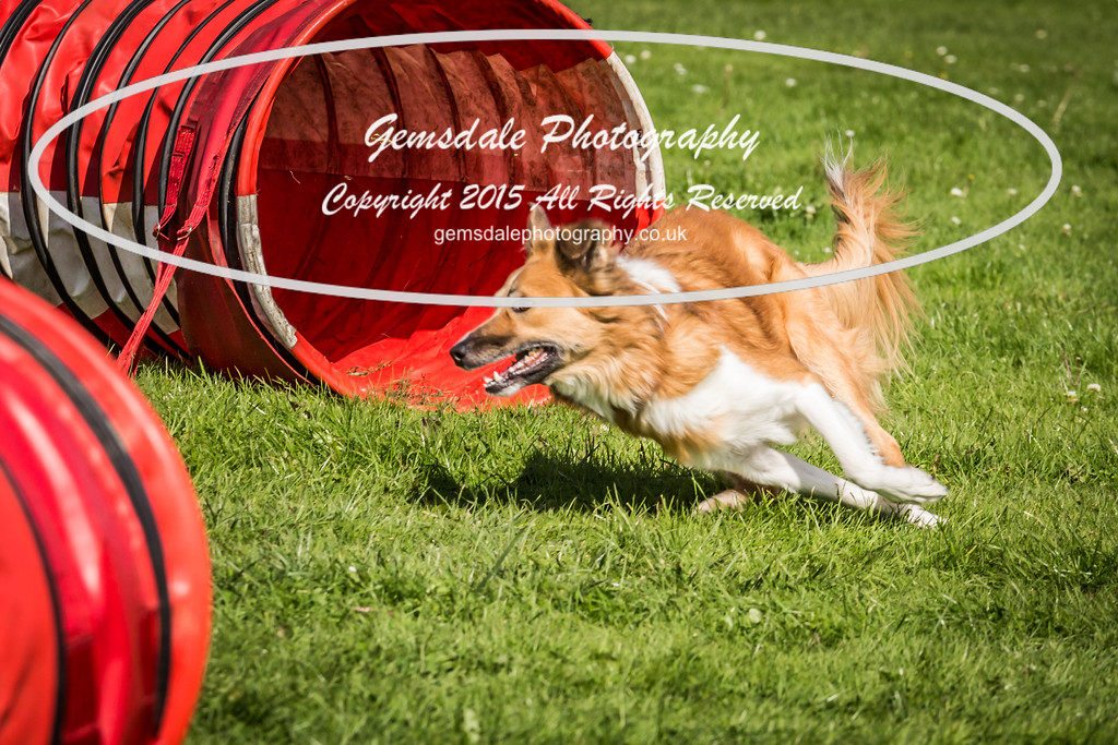 KC Southdowns Agility September 2015 -6018