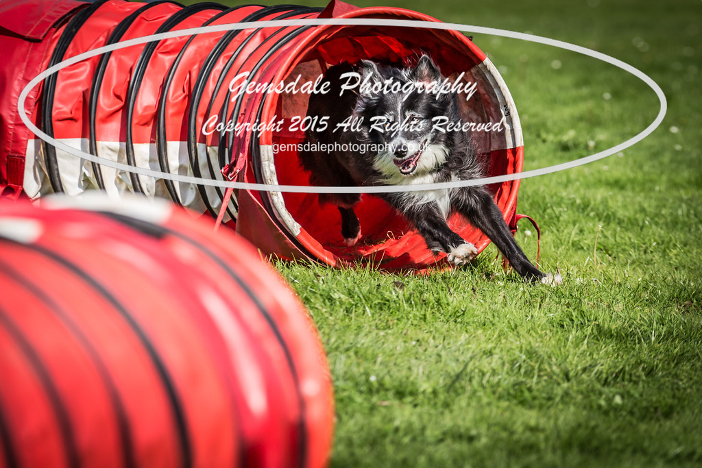 KC Southdowns Agility September 2015 -6011