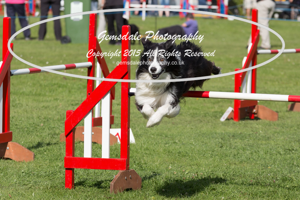 KC Southdowns Agility September 2015 -6002