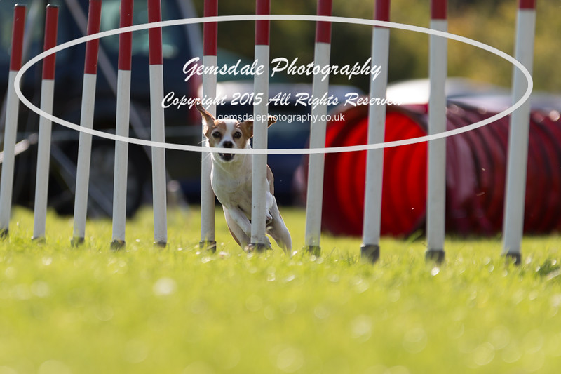 KC Southdowns Agility September 2015 -7028-2